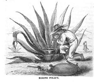 Making Pulque